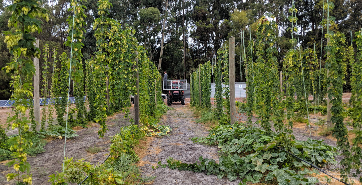 A Day In The Life Of: A Hop Farmer