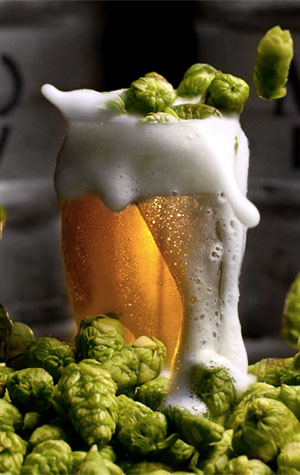 Moo Brew Fresh Hop Lager 2019 - The Crafty Pint